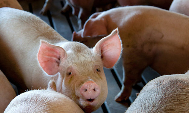 Missouri Supreme Court rules in favor of Grundy Co. CAFO