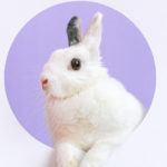 Area county fairs split on hosting rabbit shows amidst rabbit virus