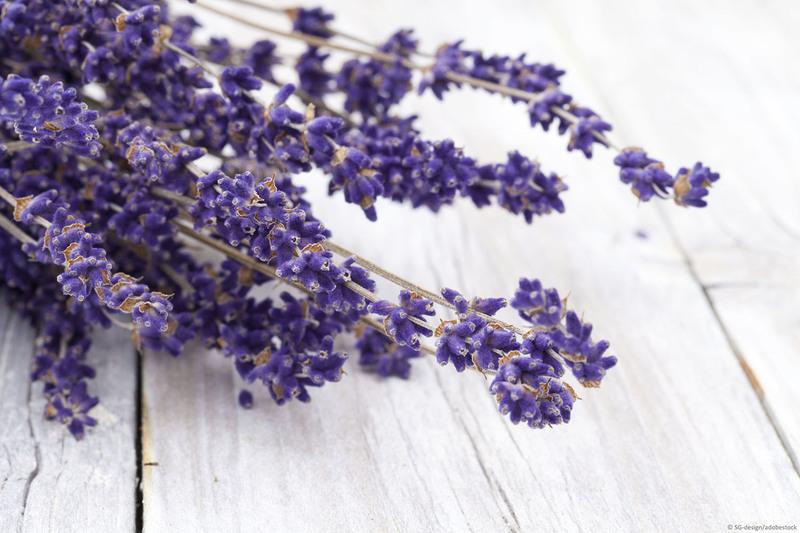 Eine Auswahl an Wandfarben in Lavendel.