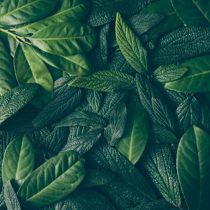 Salud y equilibrio: el verde transmite armonía