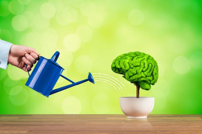 O que é mindset 7 maneiras para ter um mindset de sucesso