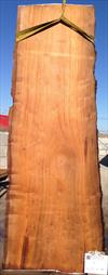 Buried Cypress slab BC01-10 at cleaning.