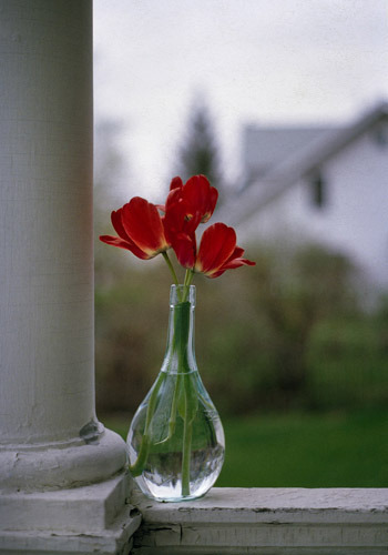 Red Tulips on my Porch, Ft. Wayne, Indiana 1979