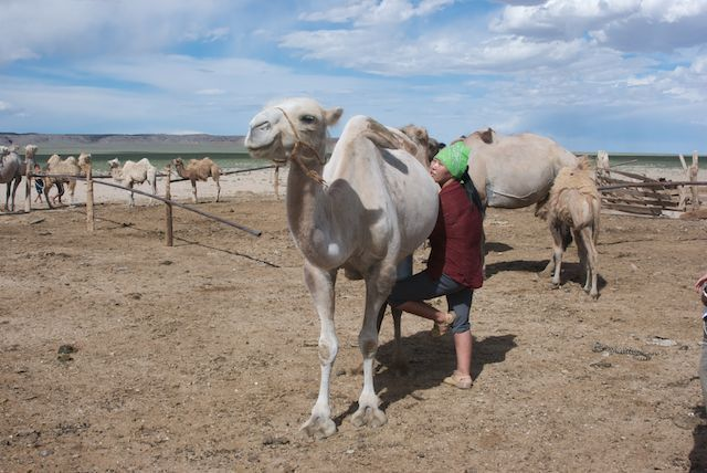 Many herders live in the Gobi; we'll be visiting with them and learning about the challenges they face