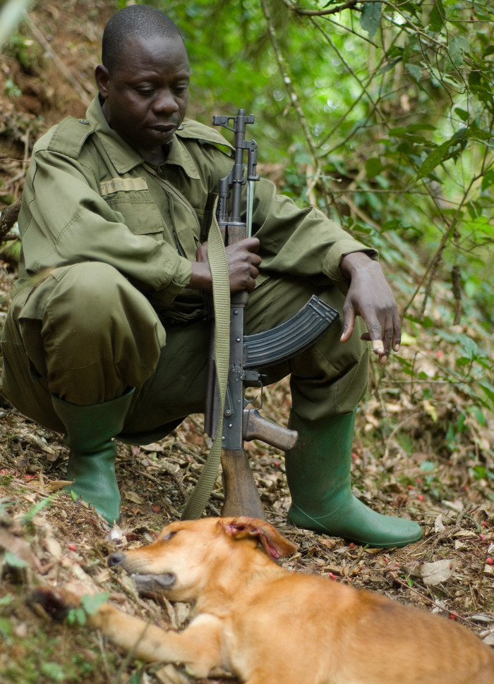 A ranger with a poacher's dead dog in the forests of Uganda