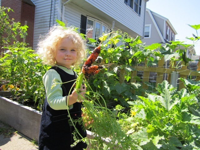 A young backyard farmer picking tonight's dinner