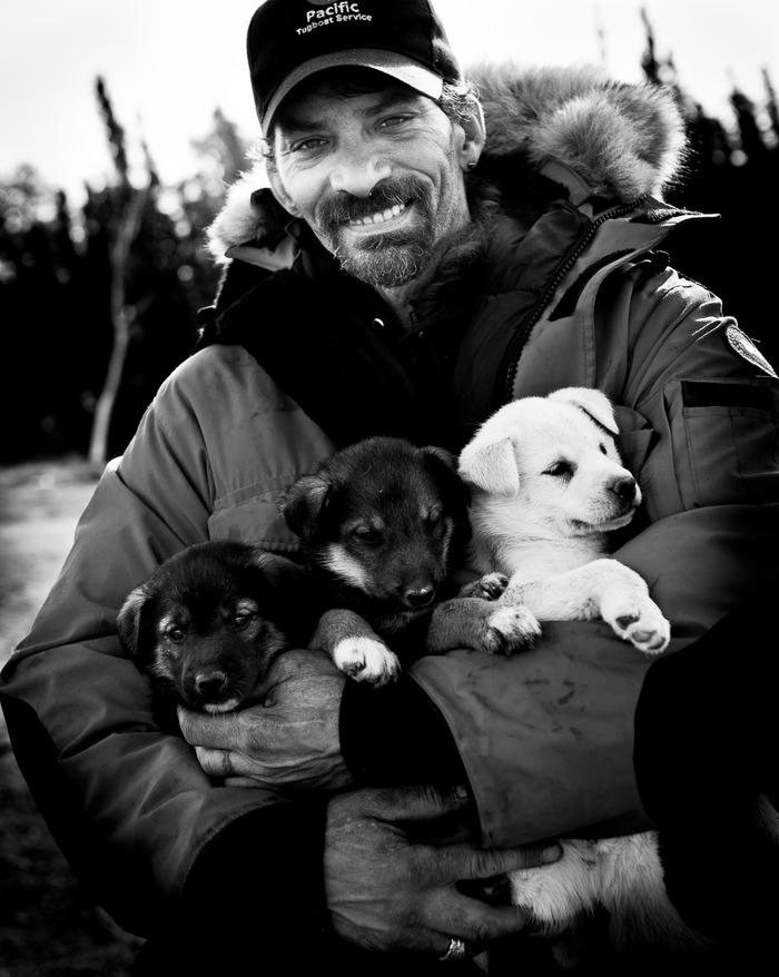 Chiots pour l'Iditarod