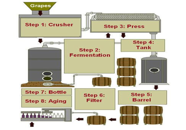 Steps in Winemaking