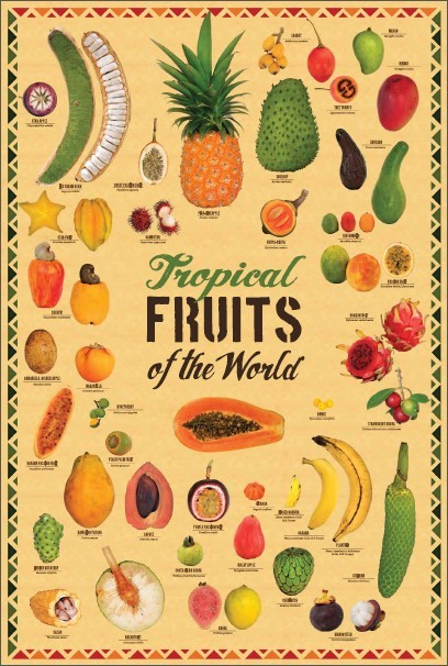 "Tropical Fruits of the World poster 19.38"" X 29"" ( W x H )"