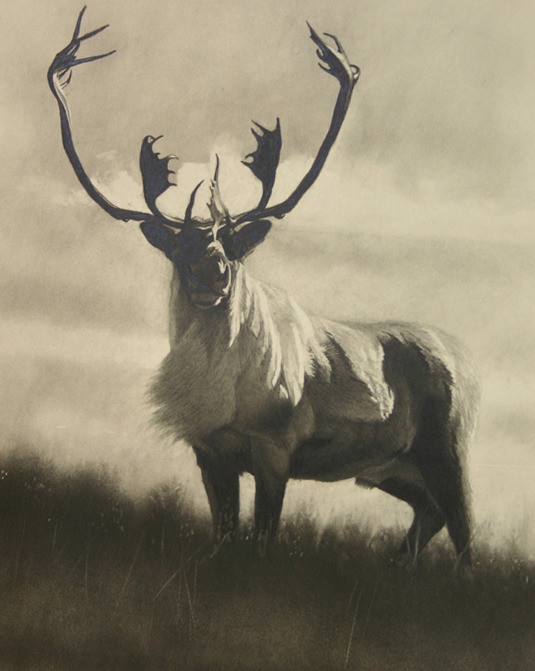 """Labrador Bull"" Graphite by Cole Johnson"