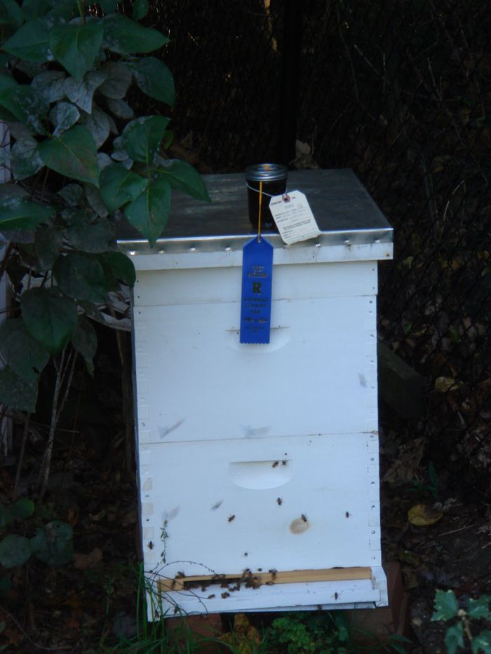 "This hive produced honey that won ""Most Popular"" at the Country Fair last year."