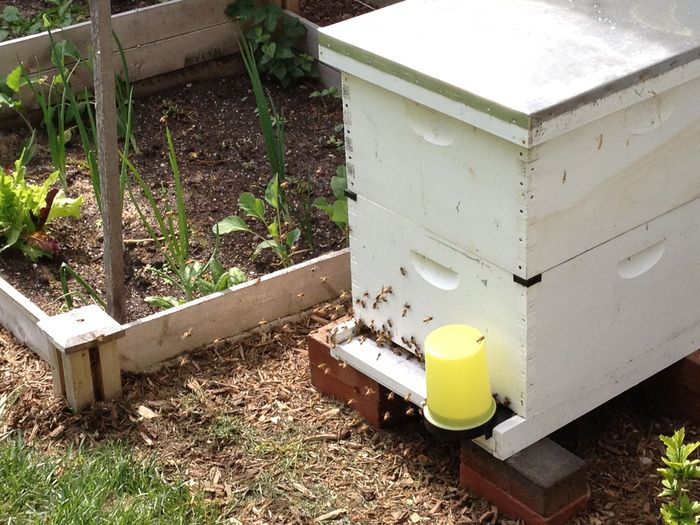 This is the newest hive. I started it this Spring.