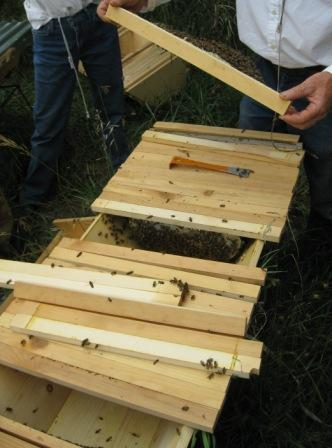 Demonstration of horizontal Top Bar Hive 2011