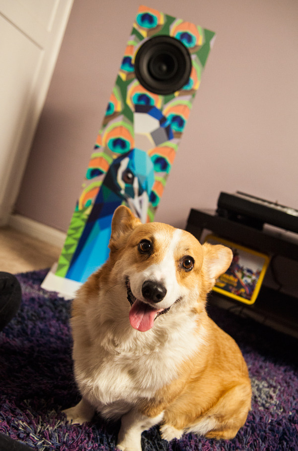 Art by Liam Brazier, corgi smile by office mascot Rexy