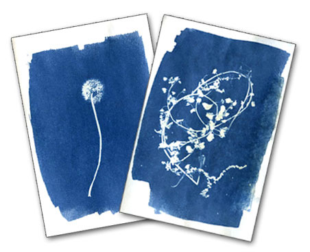 Cyanotype (Sun Print) Postcard for a minimum pledge of $125