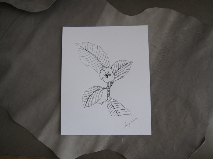 Screen print of an original drawing by the designer, from her studies of plant life in Costa Rica