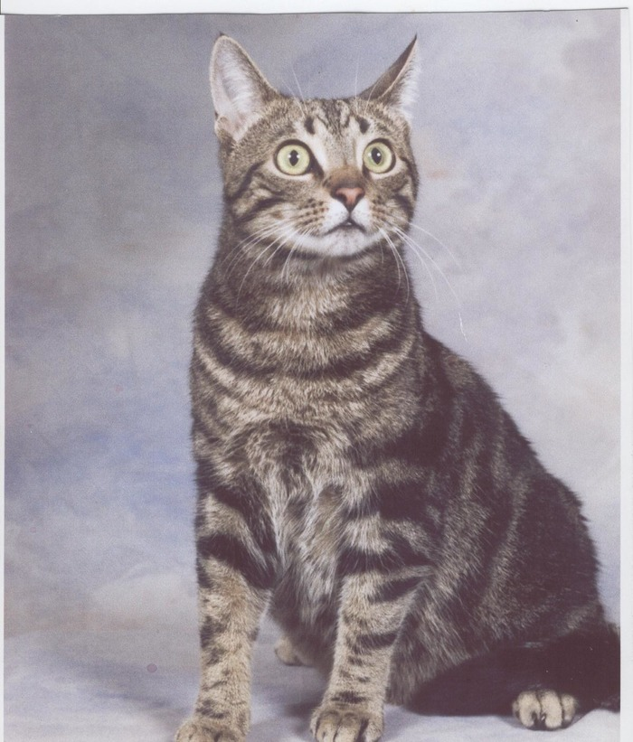 Turbo's Sears Portrait
