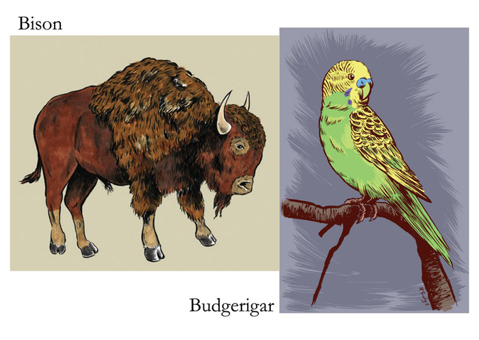 """B is for Bison and Budgerigar."""