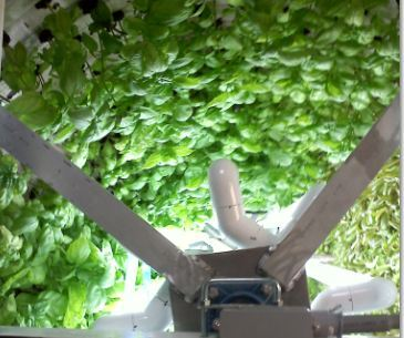 Inside an Orbiting Garden