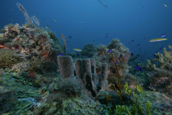 Reefs are brimming with biological diversity, but most are threatened by multiple stressors - climate change, pollution, invasions.