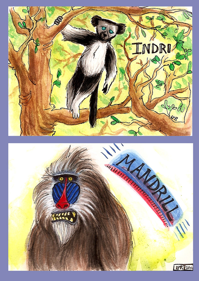 I is for Indri; M is for Mandrill