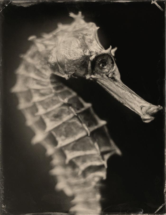 Hippocampus #1