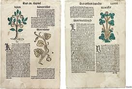 16th c. Printed , hand colored Herbal Leaves
