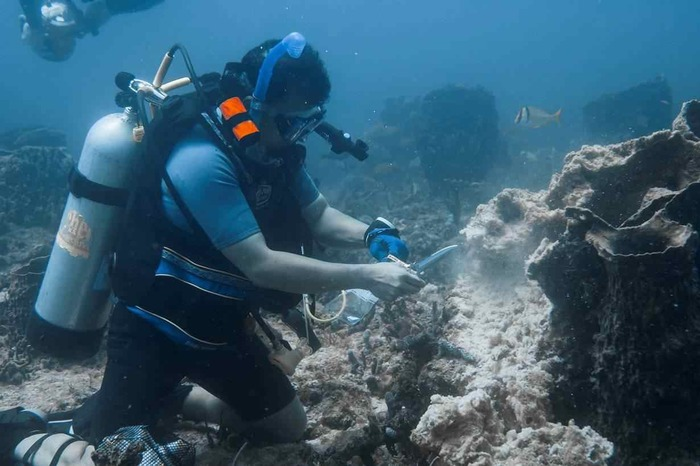 Dr Lopez collecting fresh samples of diseased barrel sponge. Note how the sponge has almost completely decayed.