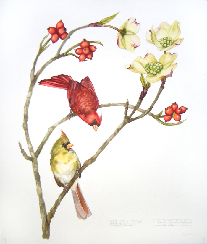Dogwood Flowers and Cardinals