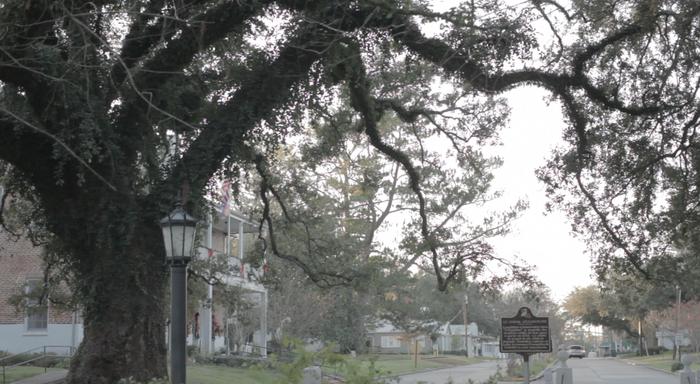 Evangenline Oak Tree, St. Martinville, LA