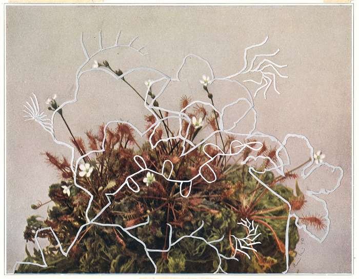 "Alexis Mackenzie's delicate collage ""Cyclic I""."