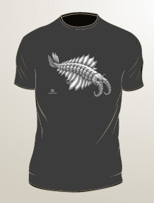 Anomalocaris: bright white ink on dark gray t-shirt (available in mens/unisex sizes S, M, L, XL, 2XL, 3XL)
