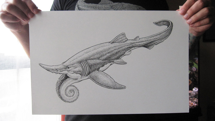 "Helicoprion: original ink drawing on bristol board, 11"" x 17"""