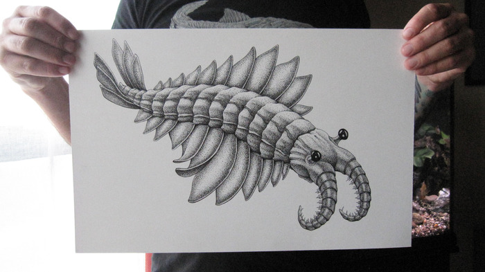 "Anomalocaris: original ink drawing on bristol board, 11"" x 17"""