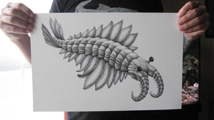 "Anomalocaris: original ink drawing on bristol board, 11"" x 17"""