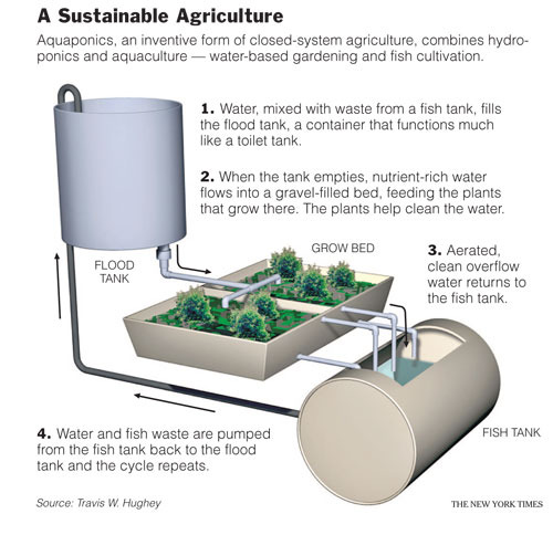 A Basic Aquaponics Set Up