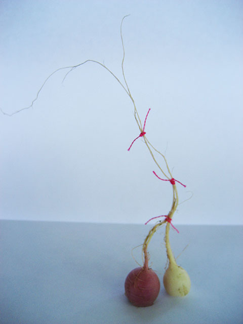 #26 - 10 of 10 left - Mixed Radishes No. 1