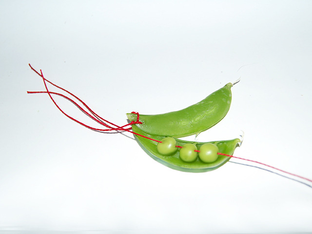 #95 - 10 of 10 left - Tom Thumb Pea No. 3