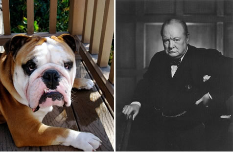 Name Inspiration, My bulldog Duke & Winston Churchill (known as the British Bulldog)