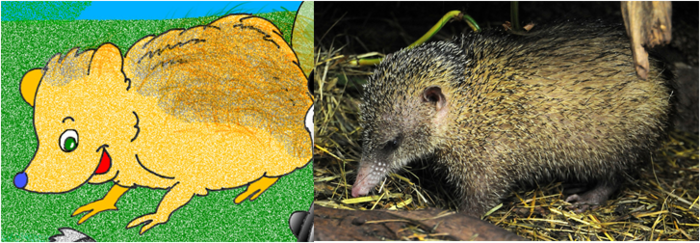 In Madagascar there is a small animal that looks like a hedgehog. Trey the Tenrec teaches us to be respectful of wildlife because everything has a grand purpose.