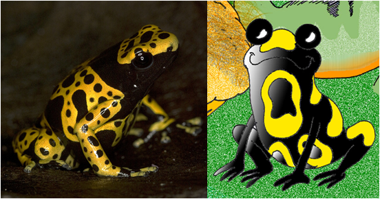 Yago the poison dart frog is a conservationist, even though he only lives on a leaf. He composts, reduces and reuses because his actions affect much larger things.