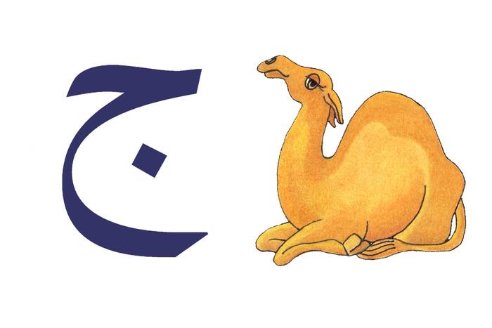 Jamel (Camel)