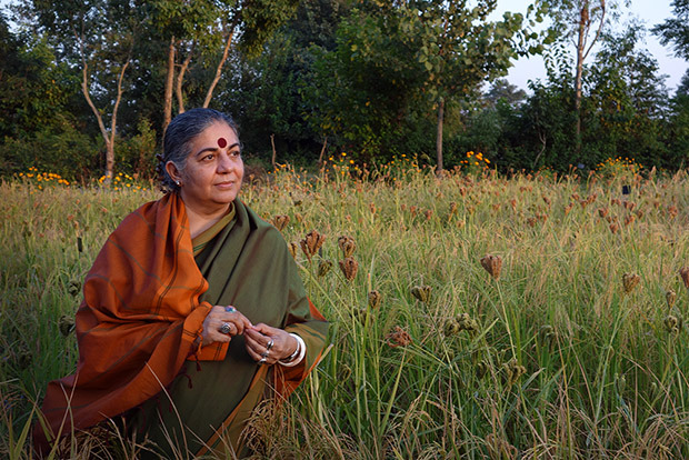 Dr. Vandana Shiva among the finger millet at Navdanya's Seed Bank in Dehradun, India