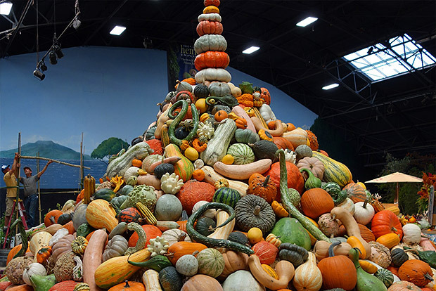 Heirloom Pumpkins, Squash and Melons in all shapes and sizes at the National Heirloom Expo
