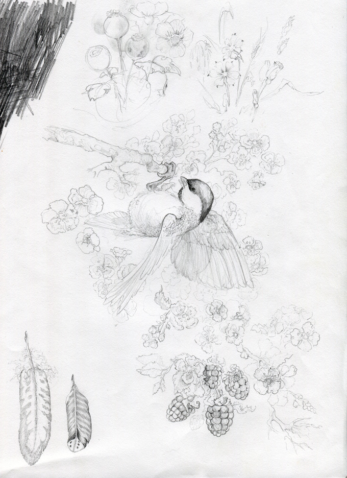 Chickadee sketch page