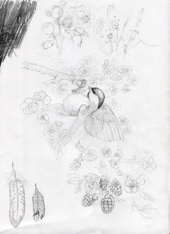 Chickadee sketch page