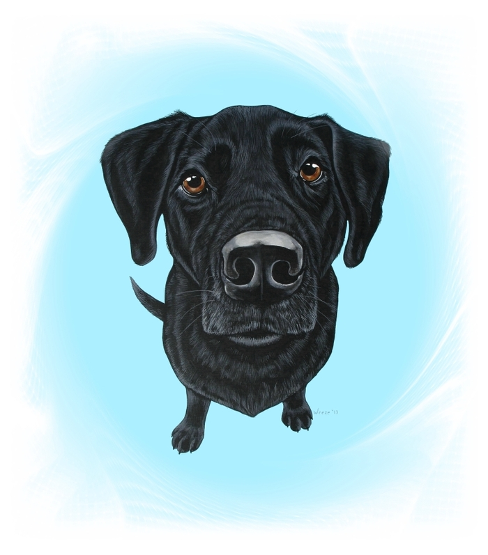 Shadow the black labrador retriever