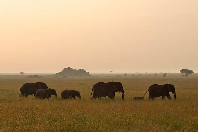 Family of elephants in Tanzania