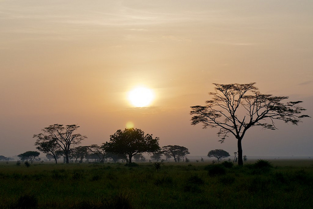 African Safari at Sunset
