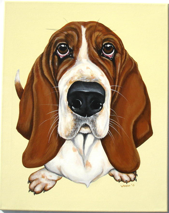 Daisy the basset hound.  What a sweet face!